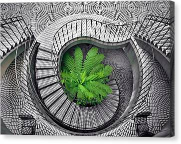 Tree Fern In The Stairs Canvas Print by Daniel Furon