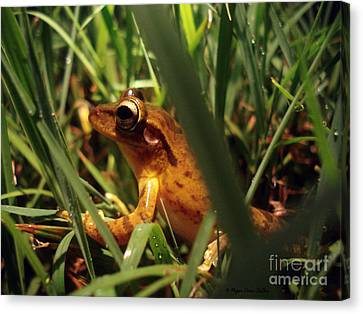 Canvas Print featuring the photograph Tree Frog Chorus by Megan Dirsa-DuBois