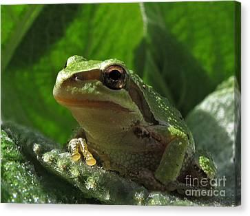 Tree Frog Canvas Print by Inge Riis McDonald