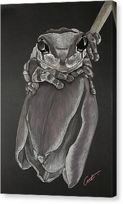 Tree Frog On Tulip Canvas Print