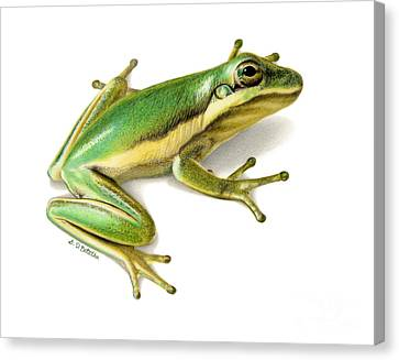 Tree Creature Canvas Print - Green Tree Frog by Sarah Batalka