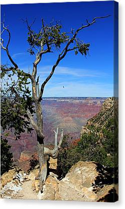 Canvas Print featuring the photograph Tree Grand Canyon by Michael Hope