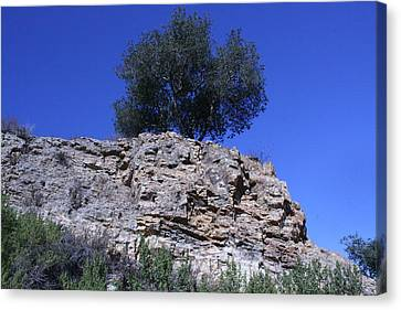 Canvas Print - Tree Growing In Rock by Marsha Ingrao