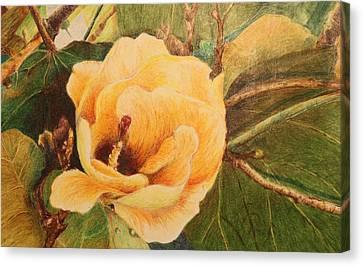 Tree Hibiscus  Of French Polynesia Canvas Print