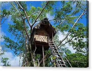 Tree House In A Banyan Tree Canvas Print by Michael Runkel