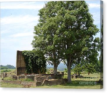 Canvas Print featuring the photograph Tree House by Jane Ford