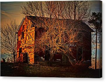 Tree House Canvas Print by Robert McCubbin