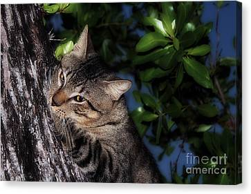 Canvas Print featuring the photograph Tree Hugging Cat by Marjorie Imbeau