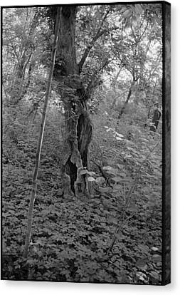 Tree In Elkins Park Canvas Print by Julie VanDore
