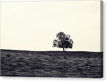 Tree In Field Canvas Print