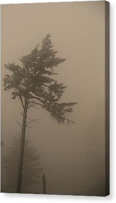 Tree In Fog Canvas Print by Dan Sproul