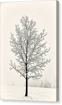Tree In Heavy Snow Canvas Print by Joseph Duba