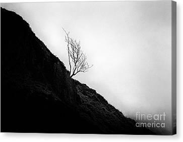 Tree In Mist Canvas Print by John Farnan