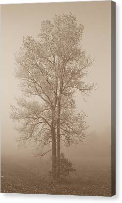 Tree In Morning Fog Canvas Print by Eje Gustafsson
