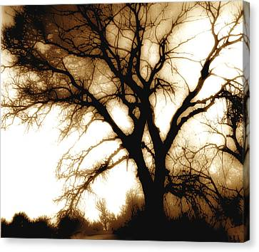 Tree In Sepia Canvas Print by Ann Powell
