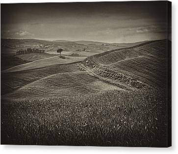 Canvas Print featuring the photograph Tree In Sienna by Hugh Smith