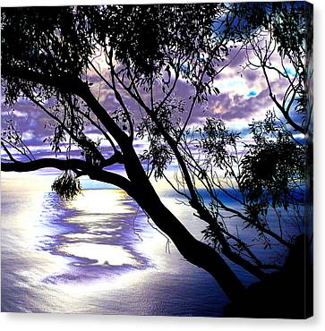 Tree In Silhouette Canvas Print