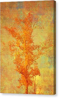Tree In Sunlight Canvas Print