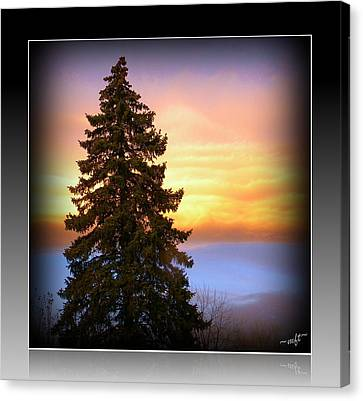 Canvas Print featuring the photograph Tree In Sunrise by Michelle Frizzell-Thompson