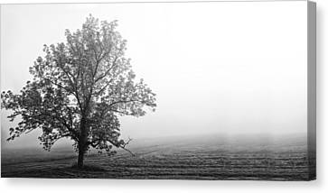 Tree In The Fog Canvas Print by Andrew Soundarajan