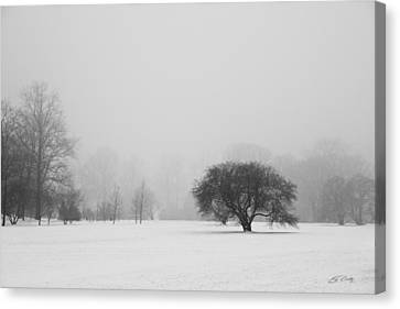 Canvas Print featuring the photograph Tree In The Fog by Ed Cilley