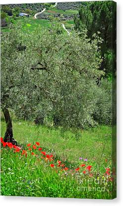 Tree In The Meadow Near Ronda  Canvas Print by Mary Machare