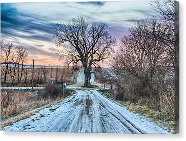 Winter Landscapes Canvas Print - Tree In The Middle Of The Road by Christopher L Nelson