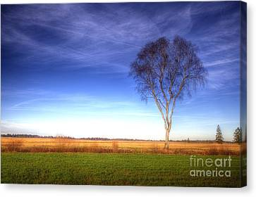 Tree In The Murnauer Moos Canvas Print
