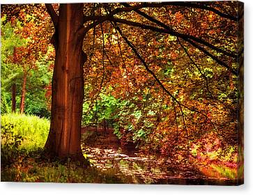 Tree In The Park. De Haar Castle. Utrecht  Canvas Print by Jenny Rainbow