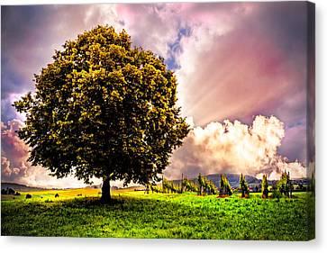 Tree In The Vineyard Canvas Print by Debra and Dave Vanderlaan