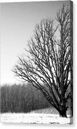 Tree In Winter 2 Canvas Print