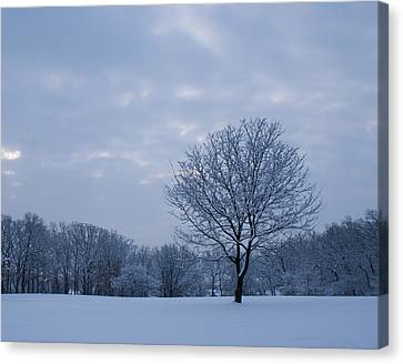 Tree In Winter Canvas Print by Larry Bohlin