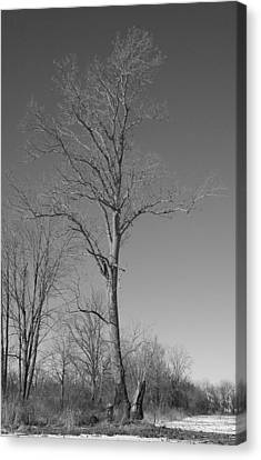Tree In Winter Canvas Print
