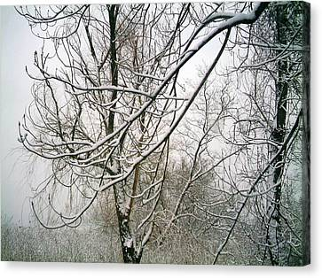 Canvas Print featuring the photograph Tree Lace by Desline Vitto