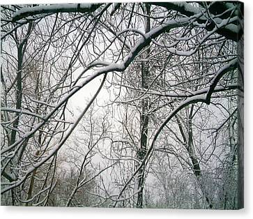 Canvas Print featuring the photograph Tree Lace Too by Desline Vitto
