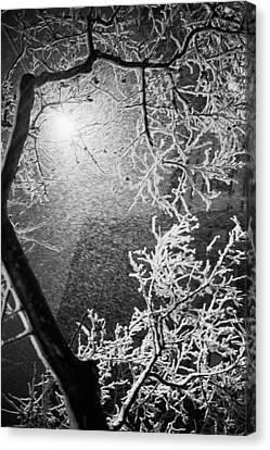 Tree Lamp Snow Canvas Print by Dave Beckerman