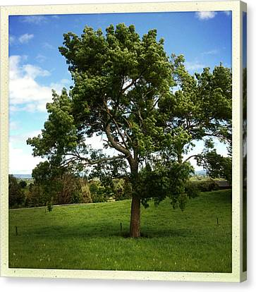 Tree Canvas Print by Les Cunliffe