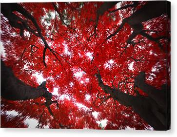 Canvas Print featuring the photograph Tree Light - Maple Leaves Fall Autumn Red by Jon Holiday