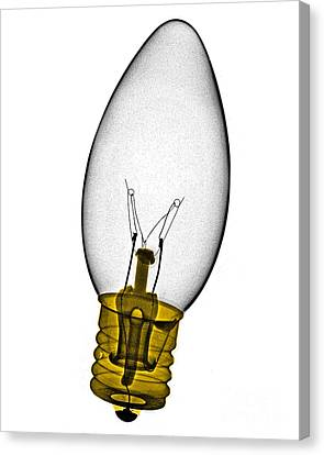 Tree Light Bulb X-ray Canvas Print by Bert Myers