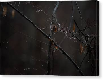 Tree Limb With Rain Drops 2 Canvas Print