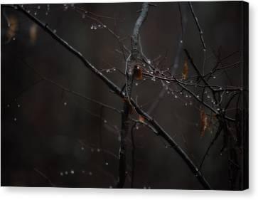 Tree Limb With Rain Drops 2 Canvas Print
