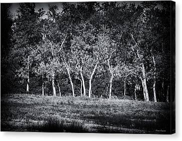 Canvas Print featuring the photograph Tree Line In Autumn  by Yvonne Emerson AKA RavenSoul