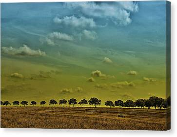 Tree Line Canvas Print by Susan D Moody