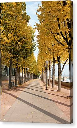 Tree-lined Pathway Along Elbe River Canvas Print
