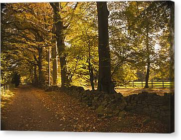 Tree Lined Road Covered With Fallen Canvas Print by John Short