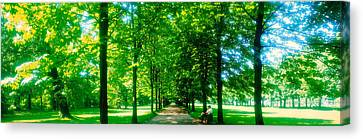 Tree-lined Road Dresden Vicinity Germany Canvas Print by Panoramic Images
