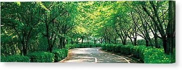 Tree Lined Road Osaka Shijonawate Japan Canvas Print by Panoramic Images