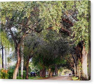Tree Lined Street In Florida Canvas Print by Debb Starr