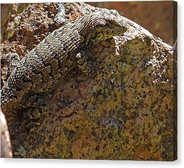 Tree Lizard Canvas Print