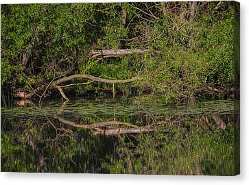 Canvas Print featuring the photograph Tree Mirroring In Water by Leif Sohlman